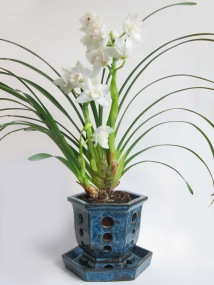 cymbidium in ash pot