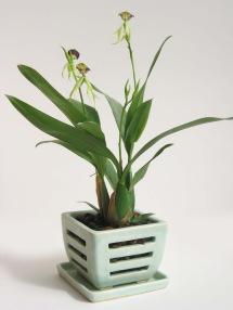 orchid pot 053